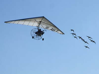 Microlight flying with geese © les Chatfield 2011